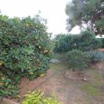villa-in-javea-in-the-montgo-area_spain_1169